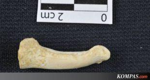 Manusia Jenis Baru Ditemukan, Namanya Homo luzonensis, dari Filipina – Kompas.com – KOMPAS.com
