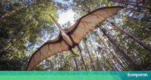 Benarkah Dinosaurus Punah Akibat Asteroid? Ini Penjelasan LAPAN – kumparan.com – kumparan.com